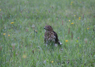 birdwatching_001