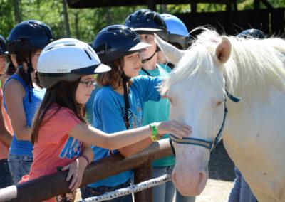 petting_horses_001