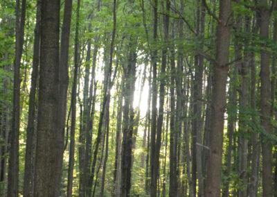 trees_001