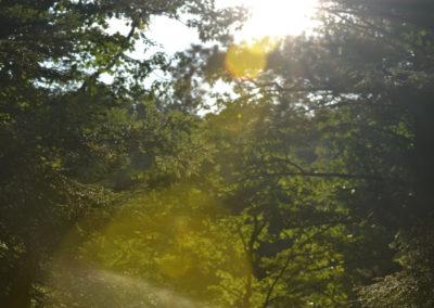 trees_002