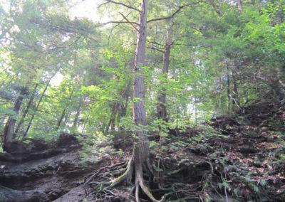 trees_005