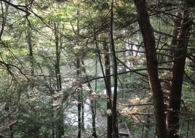 trees_006